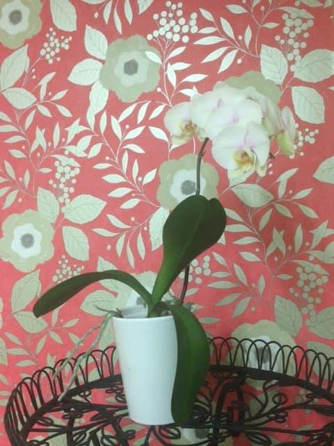 Blush Beauty Lounge Matakana